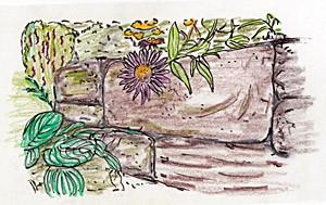 mauer-pflanzen